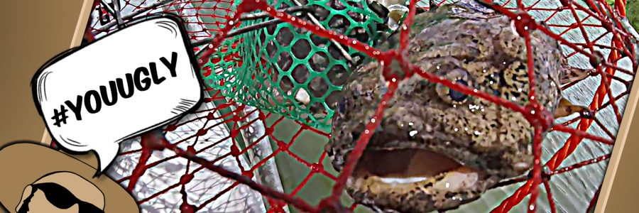 3 Spined Frogfish Fishing